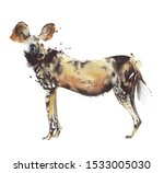 African Painted Dog Hunting Dog ...