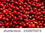 Rose Hips  Pods Of Seeds Of Red ...