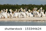 white pelicans at the... | Shutterstock . vector #153344624