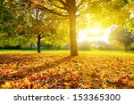 colorful foliage in the autumn... | Shutterstock . vector #153365300