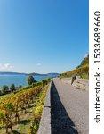 Autumn coloured vineyard - Vineyard trail from Biel to La Neuveville - Autumn in Switzerland on Lake Biel