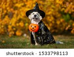 Golden Retriever Dog In A...