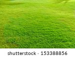 Landscape Covered With Green...