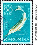 "Small photo of ROMANIA - CIRCA 1957: A stamp printed in Romania from the ""Fauna of the Danube Delta"" issue shows Stellate sturgeon (Acipenser stellatus), circa 1957."