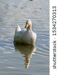 Large White Heavy Duck Also...