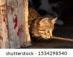 Stock photo manx kittens photographed with a macro lens mm playing in the sunset 1534298540