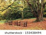 Autumn In Holland Park  London