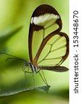 glasswinged butterfly  greta... | Shutterstock . vector #153448670