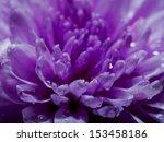 abstract flower macro | Shutterstock . vector #153458186