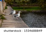Stock photo two young herring gulls larus argentatus sitting on a ledge waiting for food to appear 1534688849