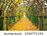 Autumn alley covered with fallen leaves. Vine covered walkway. Shaded walkway.