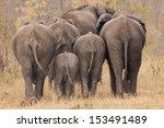 Breeding Herd Of Rear End...