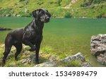 Beatuful  Black  Female Dog ...