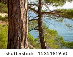 Tree Trunk On A Background Of...