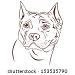 illustration brown pitbull head | Shutterstock .eps vector #153535790