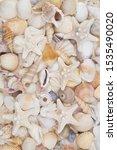 Tropical Seashells Background...
