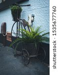 Small photo of An old penny farthing bike outside of a blue house with contrasting greenery