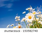 Summer Field With White Daisies ...
