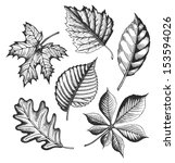 autumn leaves set in a sketch... | Shutterstock .eps vector #153594026