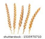 a bright closeup of a bunch of...   Shutterstock . vector #1535970710