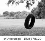 Tire Swing In Strong Old Tree