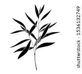 vector eucalyptus leaves branch.... | Shutterstock .eps vector #1536132749