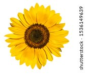 Sunflower Flower Isloted On A...