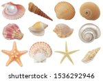 Collection Of Seashells And...