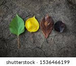 life cycle leaflet autumn... | Shutterstock . vector #1536466199