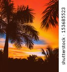 Palm Tree. Guanacaste  Costa...