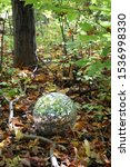 Small photo of Shiny disco ball on the ground in a forest with colorful leaves in the background. Magical forest / retro dance floor. Whimsical fun. Vertical.