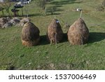 Romania Maramures Village Hay...