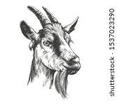 Goat Hand Drawn Vector...
