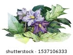 Nightshade Violet Flowers With...