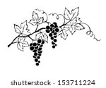 Vector Illustration    Grapevine