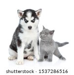 Stock photo siberian husky puppy and british kitten sit together isolated on white background 1537286516