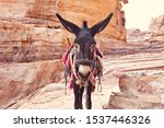 Donkey In Petra Ancient Town....