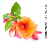 Stock photo flowers hibiscus and frangipani isolated on a white 153759443