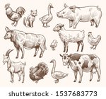 Sketch Farm Animals. Pig And...