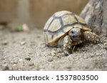 Stock photo close up african spurred tortoise resting in the garden slow life africa spurred tortoise 1537803500