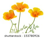 Eschscholzia Californica Flower ...