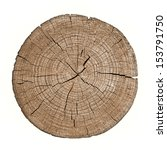 cross section of tree trunk... | Shutterstock . vector #153791750