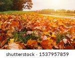 Autumn Footpath Near River...