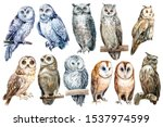 Set Of Owls On An Isolated...