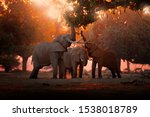 Elephant feeding feeding tree...