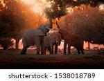 Elephant Feeding Feeding Tree...