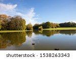 Ducks Swim In A Pond  Birds An...