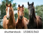 Stock photo group of three young horses on the pasture 153831563