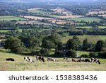 Small photo of Kilkenny Ireland. 08/19/2019. Cattle graze on Irish pasture as the unsettled relations in the beef industry cause trouble for factories and farmers alike.