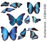 Collection Of Blue Morpho...